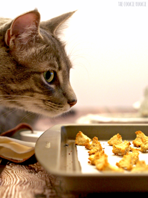 Tuna & Catnip Croutons